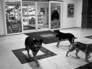 Hunde_Chile2