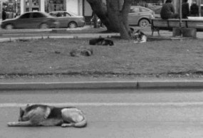Die schlafenden Hunde von Chile